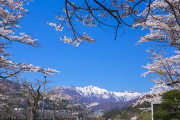 春の赤谷湖畔2
