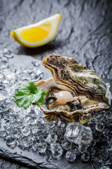 Freshly caught oysters on ice