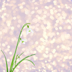 Spring white snowdrops on blurry golden tinsel with bokeh effect
