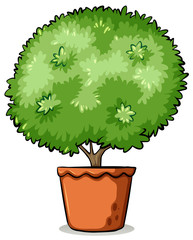 Pot with a green plant