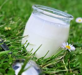 yaourt artisanal sans colorant ni conservateur