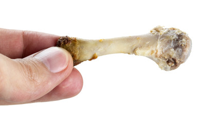 Hand holding a chicken bone