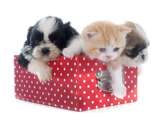puppy, kitten and chick