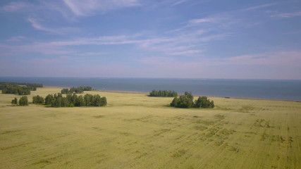 Aerial Overflight of a yellow wheat field. Blue sea