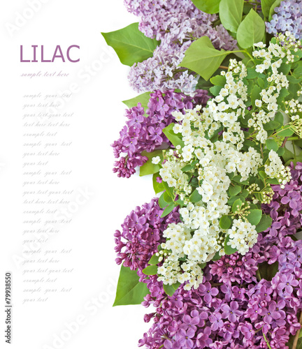 Fotobehang Lilac Lilac flowers background isolated on white