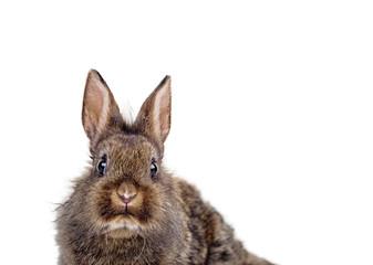 osterhase kaninchen