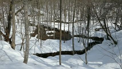 雪が溶けて春が来た。_スライダー撮影。