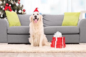 Dog with Santa hat sitting by a sofa