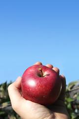 Bio Apfel in der Hand