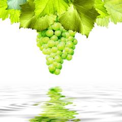 Trauben mit Wasserspiegelung