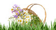 basket with wild flowers - white background