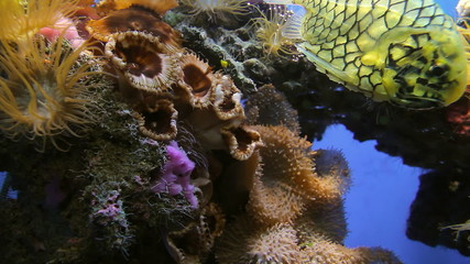 Tropical Reef Close Up
