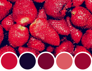 Color Palette Of Red Summer Strawberry Fruits