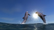 Two dolphins - 79955903