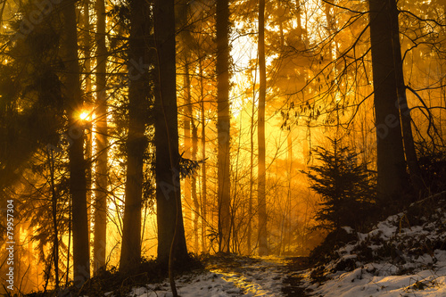 Morgens im Schwarzwald