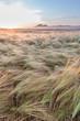 Young wheat growing in green farm field under blue sky - 79957987