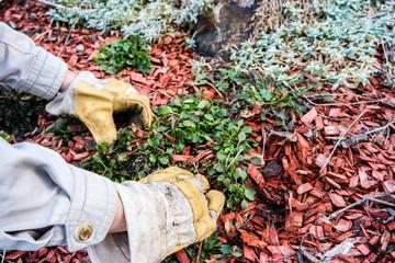 Gartenarbeit im Steingarten02