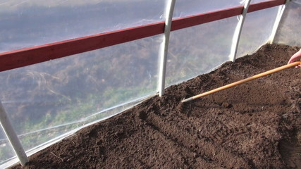rake soil earth in spring time greenhouse for sowing