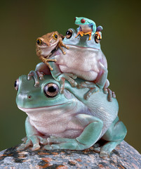 Frog Pile