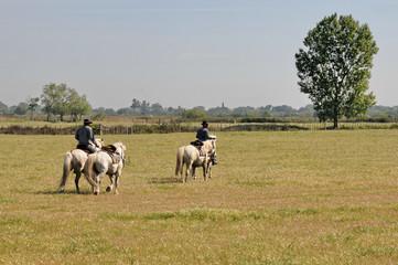 Camargue, cavalli 5