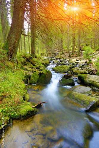 Mountain river in grren forest - 79961373