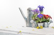 fleurs printanières et arrosoirs