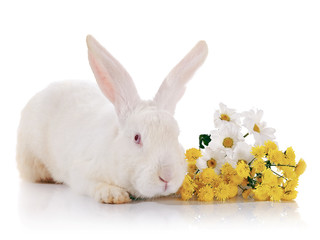 White rabbit with red eyes with flowers.