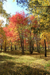 Autumn landscape - mixed forest