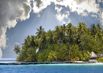 The island with palm trees in the ocean..