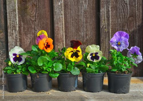 Zdjęcia na płótnie, fototapety, obrazy : Garten pflanzen im Frühling