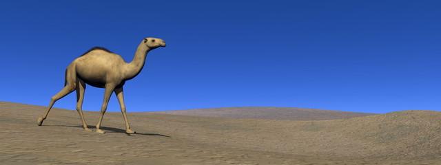 Camel walking - 3D render