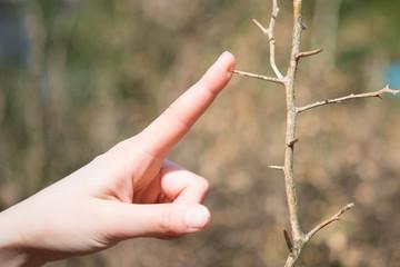木の棘と女性の手