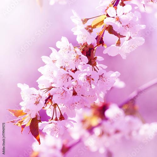 Fotobehang Purper Der Frühling ist da
