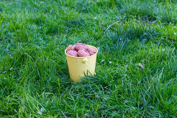 walnut in a bucket