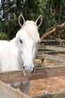 Obrazy na płótnie, fototapety, zdjęcia, fotoobrazy drukowane : White Horse