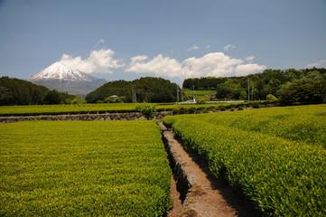fazenda de chá do japão