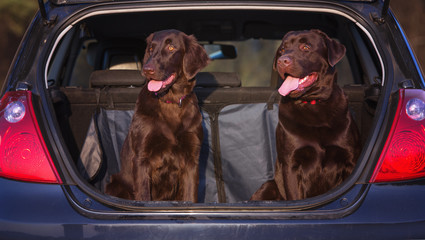 two dogs sitting in a car truck