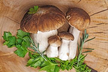 mushrooms - Boletus edulis