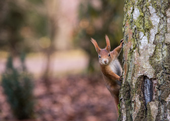 Hallo Eichhörnchen
