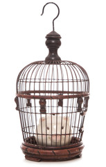 piggy bank trapped in a cage
