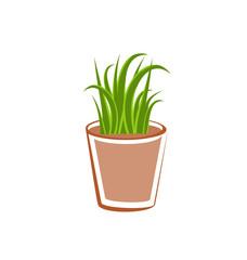 Flowerpot with green grass plants