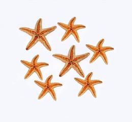 gruppo di stelle marine su sfondo bianco