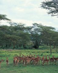 야생동물의 세계