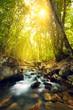 Leinwanddruck Bild - Sunset in the beautiful forest. Mountain river. Summer landscape