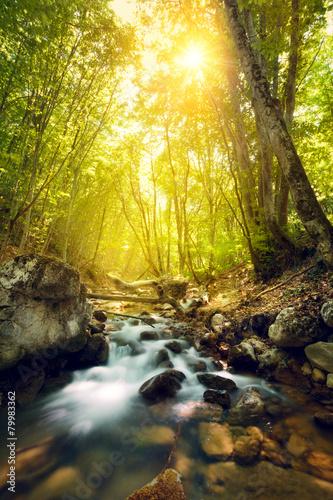 Leinwanddruck Bild Sunset in the beautiful forest. Mountain river. Summer landscape