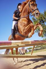 Mädchen auf Pferd, Hindernis auf Kurs