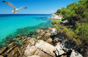 Seagulls over shallow sea