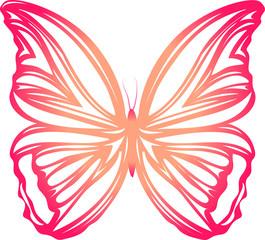 farfalla vettoriale