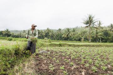 Indonesien, Lombok, Mann arbeitet im Feld