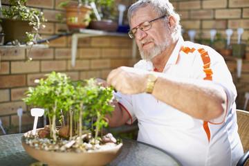 Älterer Mann bei der Pflege von Pflanzen